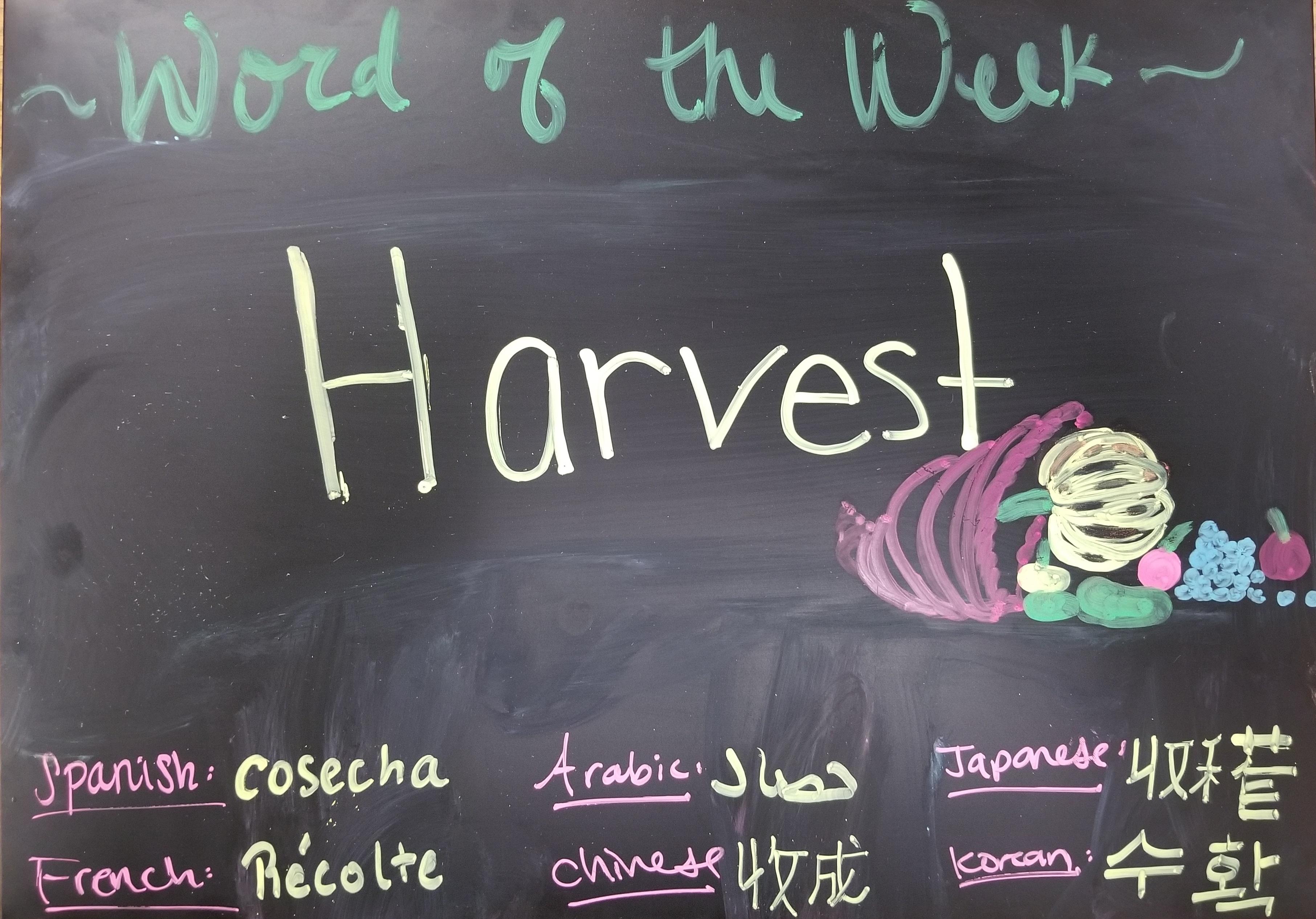 Word of the week- Harvest